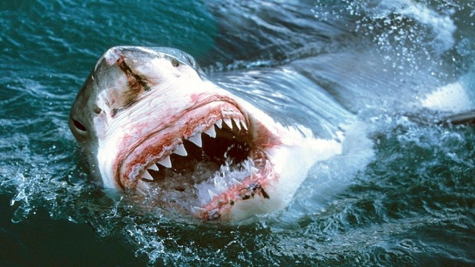 australie attaque requin