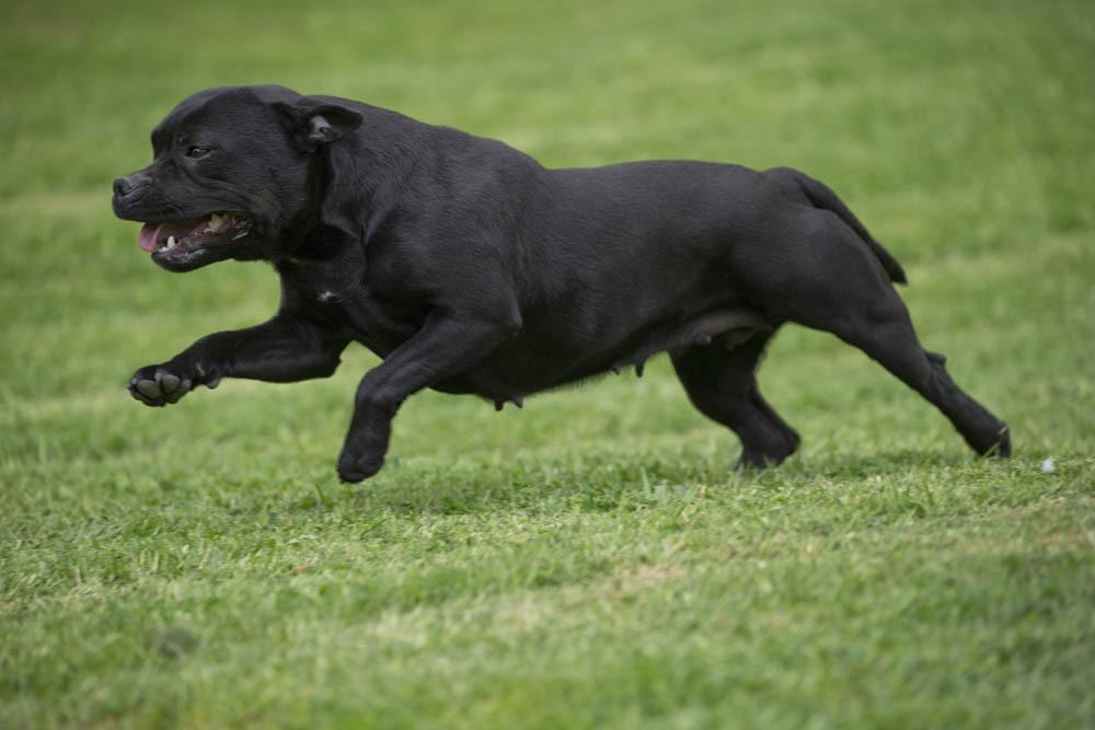 Un chien avale du crack et tue son propriétaire — Angleterre
