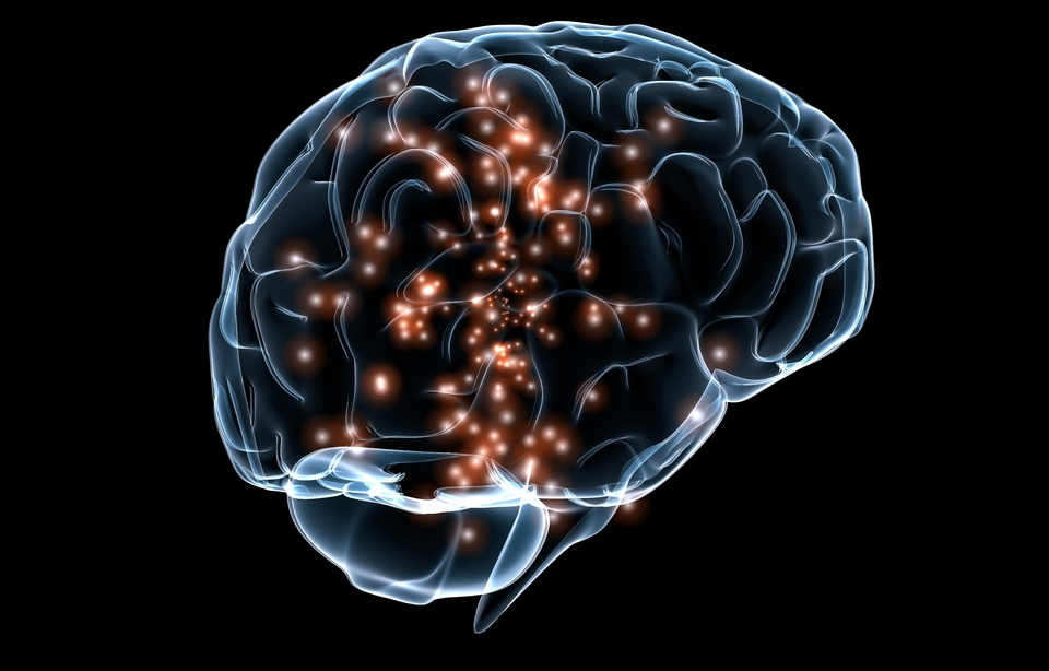 Le cerveau féminin arriverait à maturité avant celui des hommes