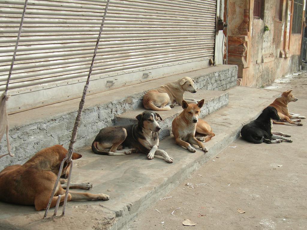 Des milliers de chiens éradiqués en Russie