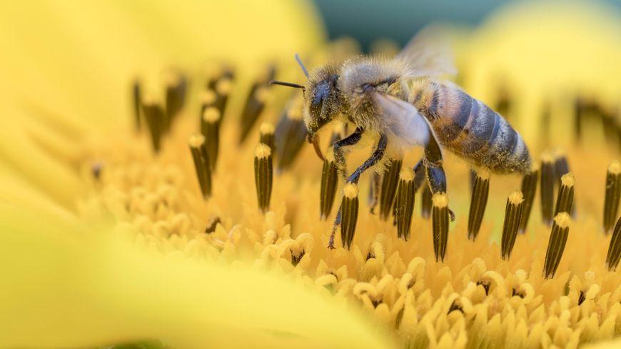 Trois pesticides dangereux pour les abeilles — Néonicotinoïdes