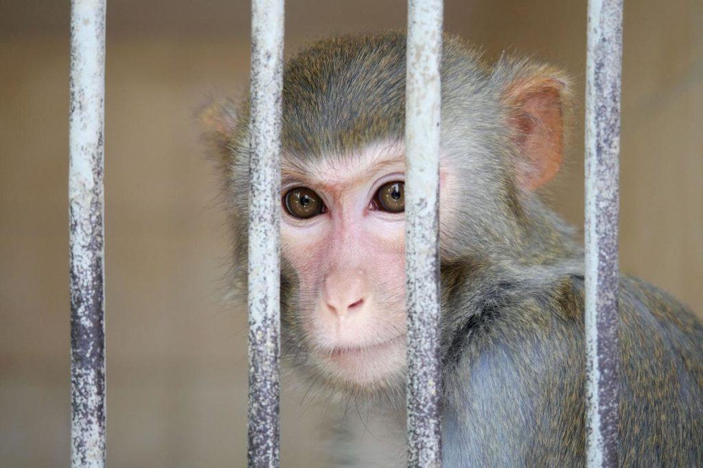 Le premier code juridique de l'animal voit le jour en France