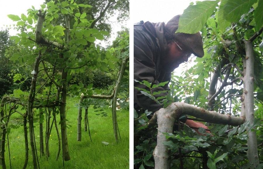 L homme qui faisait pousser des chaises dans les arbres for Chaise de poste