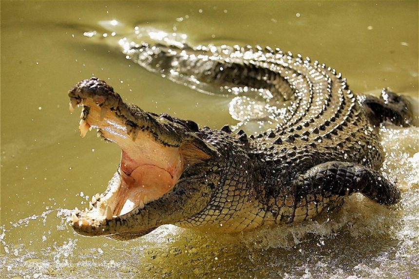 INSOLITE : La population jette un violeur présumé aux crocodiles
