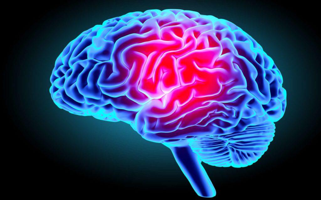 une partie du cerveau est inactive chez les go stes minutenews. Black Bedroom Furniture Sets. Home Design Ideas